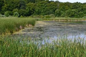 Marsh Around Green Heron Pond