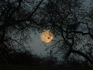 DSCN6441 Moon