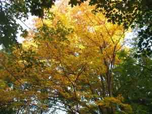 Gold Overhead