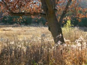 DSCN6476 Field of seedheads