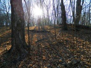 DSCN6504 Forest sunlight