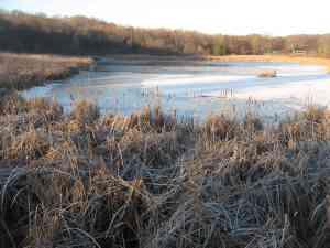 Green Heron Pond
