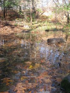 Reflections on Brook-land Pool