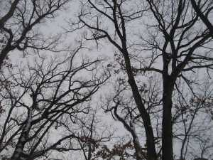 New Year's Leafless Tracery
