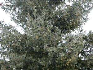 Flocked pine needles