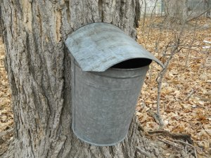 Metal Sap Bucket