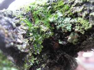 Moss and Lichen on Tree Bark