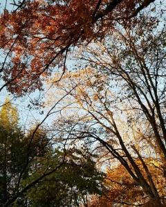 A Tale of Three Trees