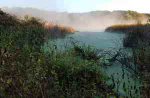 Mist on Green Heron Pond