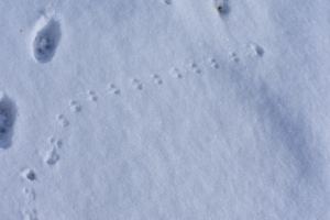 Tiny Mouse Tracks