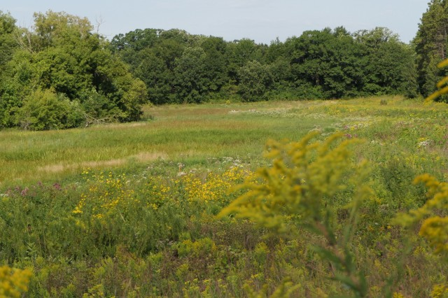 Spring Peeper Meadow