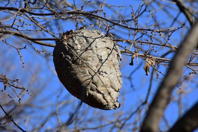 DSC_0205 Hornets Nest