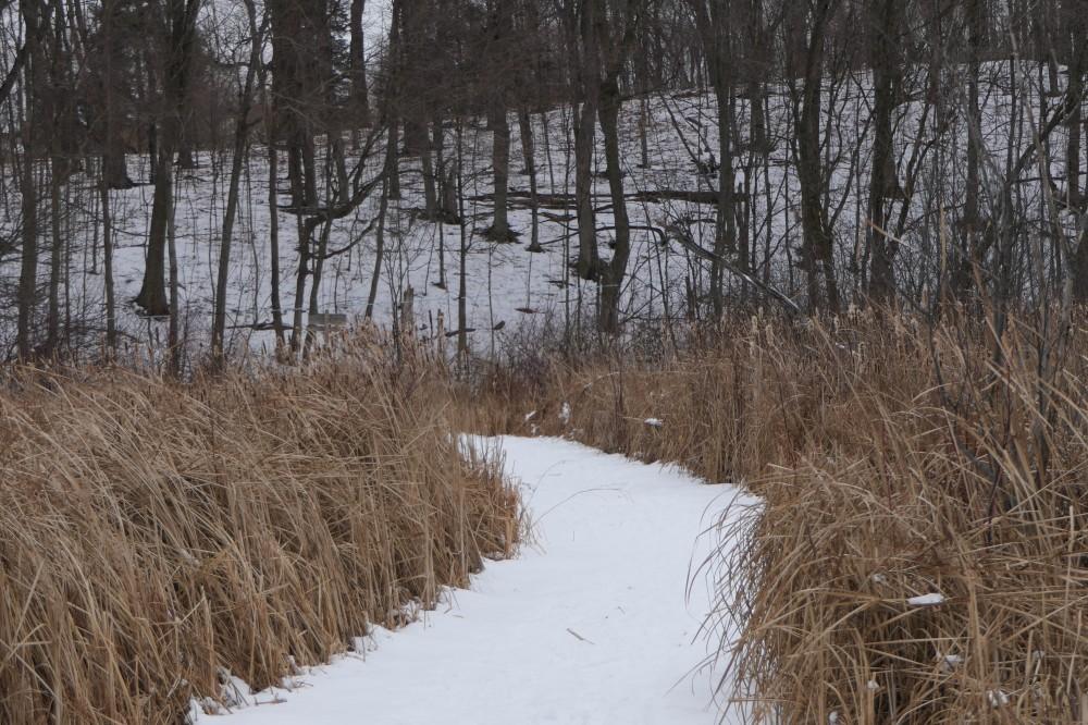 Wood Duck Trail