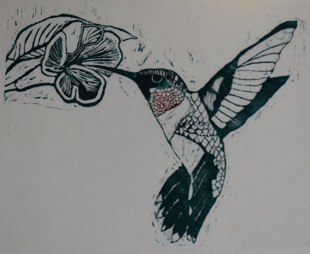 DSC_0749 Ruby throated hummingbird