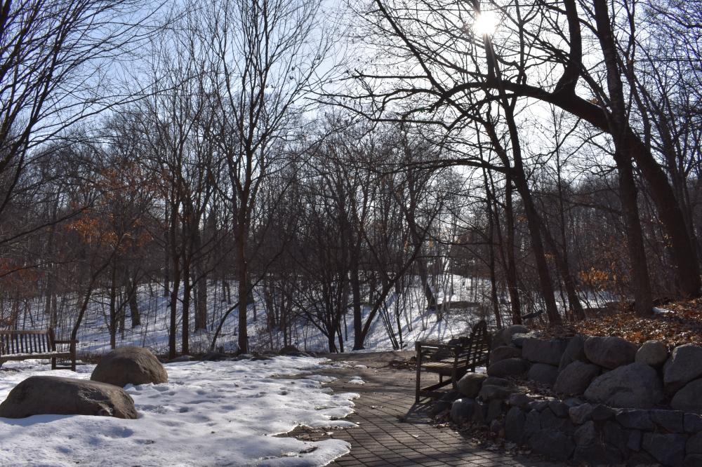 DSC_0781 Sun on Snow