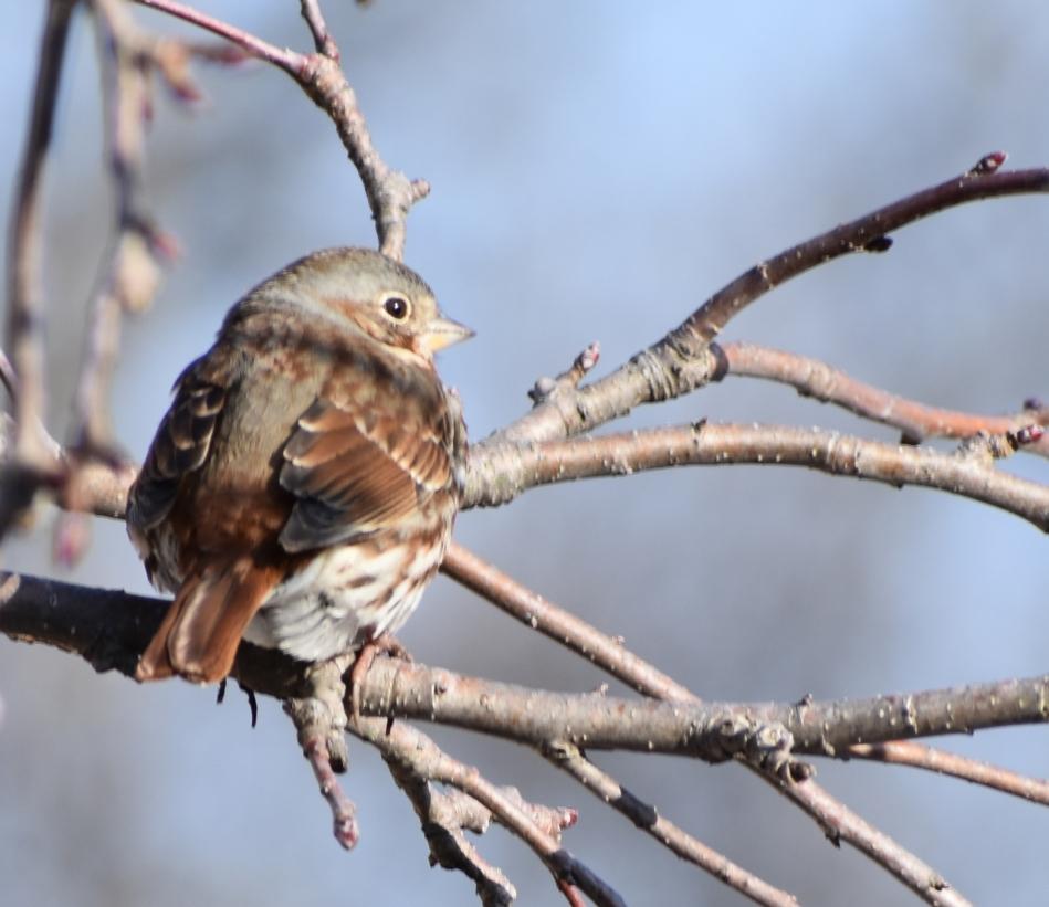 DSC_0820 sparrow