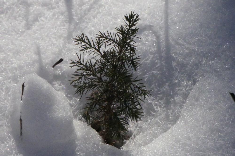 Flaky snow