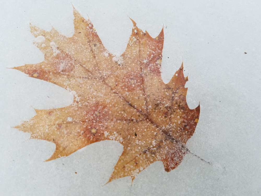 red oak leaf and bubbles