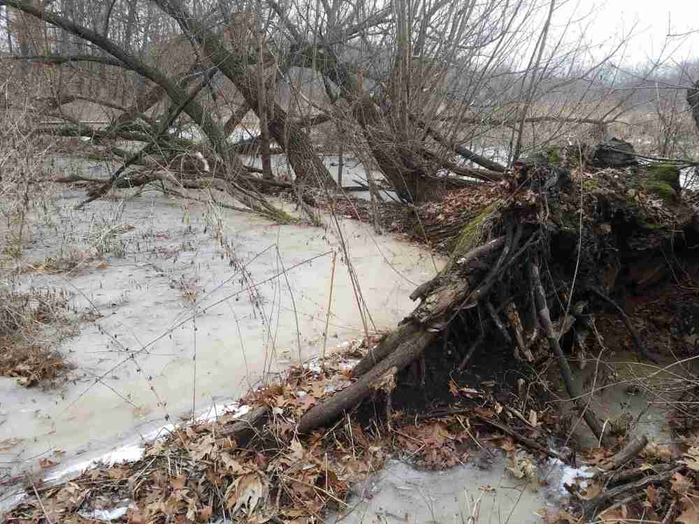 swamp and fallen tree
