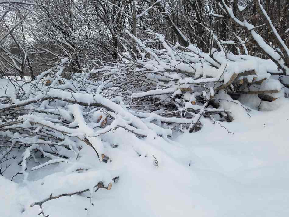 Brush Pile - Shelter